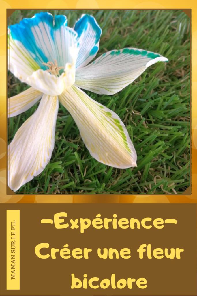 Activité enfants - Colorer des fleurs - expérience observationd du monde du vivant - Créer une fleur bicolore - Printemps avec paquerette narcisse ou jonquille - mslf
