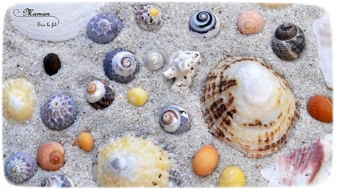 Bac sensoriel de l'été - Invitation à jouer et créer Sable et Coquillages - Plage mer - Activité créative enfants - mslf