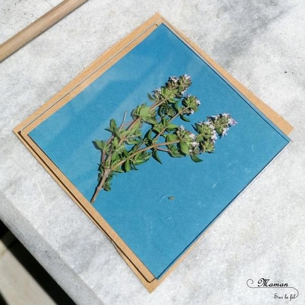 Découvrir la technique du cyanotype - Impression soleil - Papiers photosensibles - Utiliser la nature et le soleil pour créer de petits tableaux bleus cyan - Décorations DIY Chambre enfants - Fleurs, végétations, fougères - Kit Sunprint - Météo et été - Expérience et sciences enfants - - activité créative et manuelle enfants - Bricolage Eté - Tutoriel - Arts visuels, projet collaboratif maternelle et élémentaire - Cycles 1 et 2 - mslf